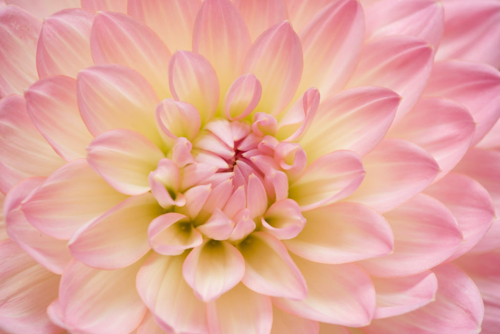 サンプル画像、花